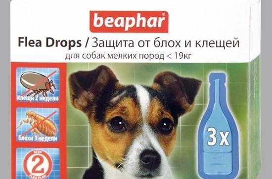 ROYAL CANIN для кошек в Екатеринбурге. Сравнить цены